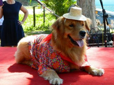 Imagem mostra cão com traje de são joão