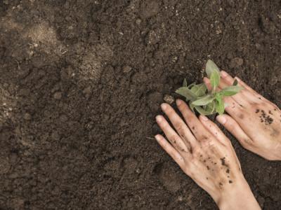 Imagem mostra mãos plantando árvore
