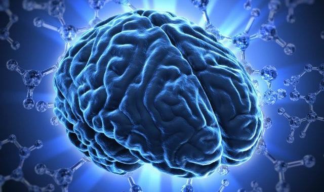 imagem mostra  um cérebro humano e seus neurônios