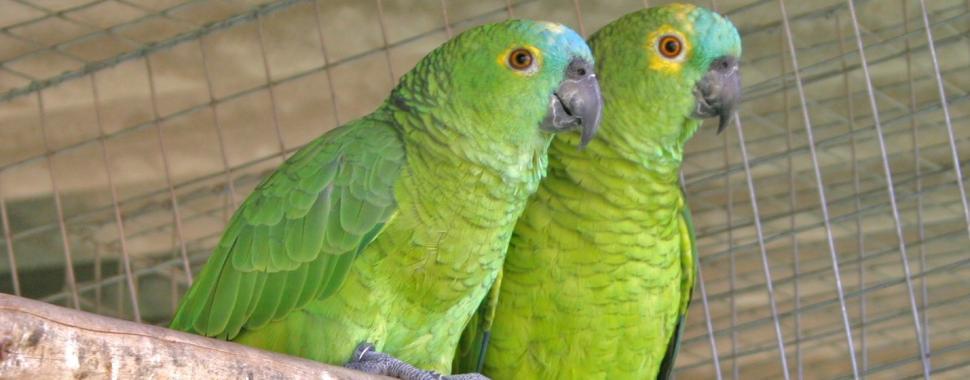 imagem mostra dois papagaios que significa o nome do festival