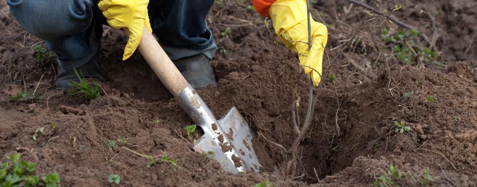O agrônomo é encarregado de todo o sistema de produção, desde o preparo do solo até a entrega do produto final/Freepik
