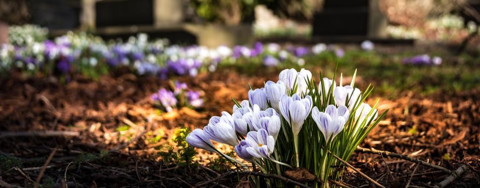 Conheça os conceitos de vida e morte segundo as religiões Católica, Espírita, Candomblé e Protestante/Pixabay