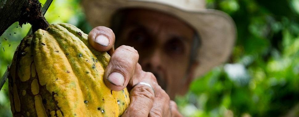 Fruta produz manteiga, bebidas e outras sobremesas além do chocolate. Foto: Pixabay