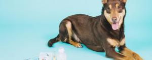 Apesar das dicas serem importantes é crucial levar o pet ao veterinário o mais rápido possível. Foto: Freepik