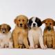 Imagem mostra cachorros reunidos
