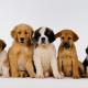 Imagem mostra cachorros juntos