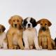 Imagem mostra cachorros de várias raças juntos